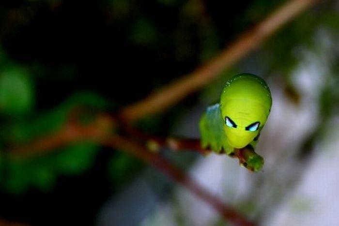 Насекомые, которые могли бы сниматься фильмах про пришельцев (16 фото)