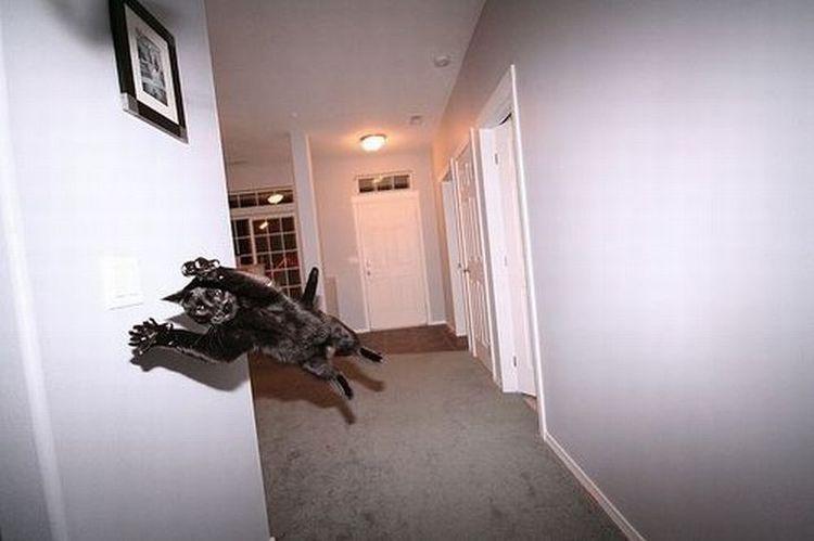 Иллюзия полета (28 фото)