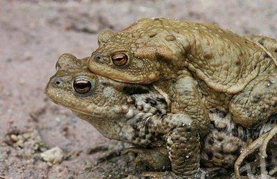 Животные во время секса (19 Фото)