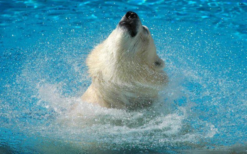 Картинки на телефон медвежата 12