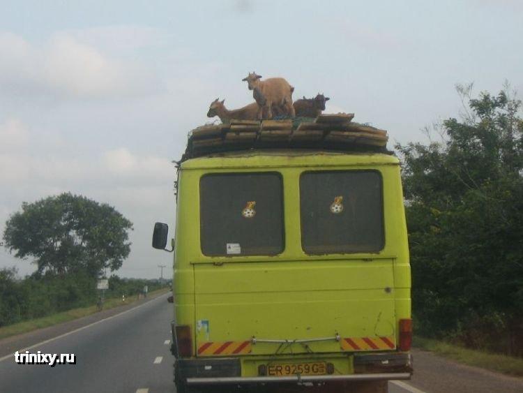 Жизнь в Африки (35 фото)