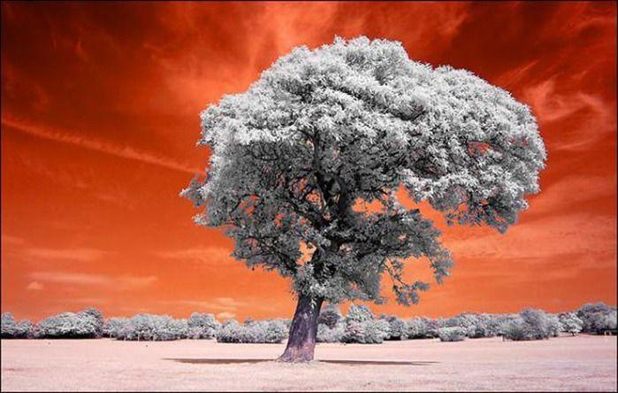 Потрясающая природа (23 фото)