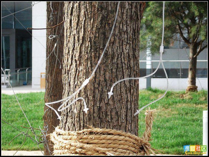 Подкормка для деревьев (14 фото)