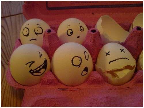 Живые яйца (21 фото)