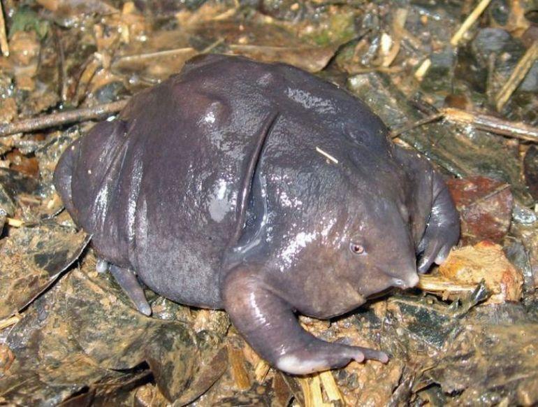 Пурпурная лягушка (13 фото + видео)