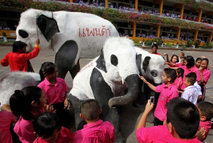 Слоны превратились в панд в знак протеста (11 фото)
