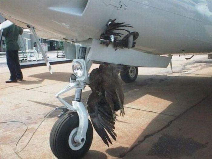 Птицы против самолетов (25 фото)