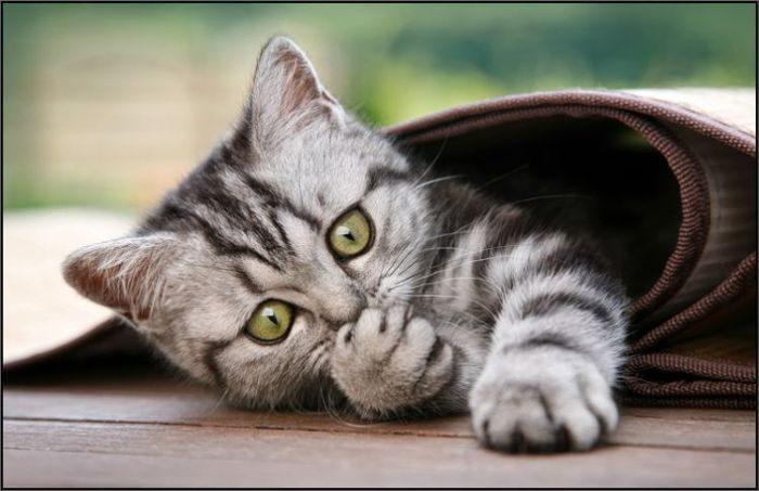 Прикольные коты (37 фото)