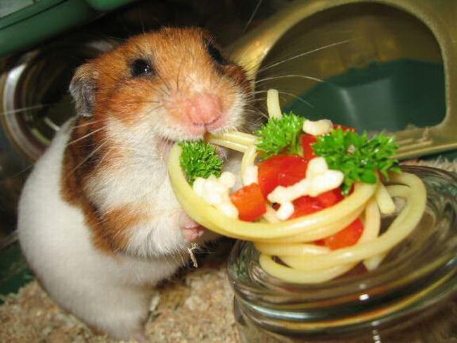 Обед для лучшего друга