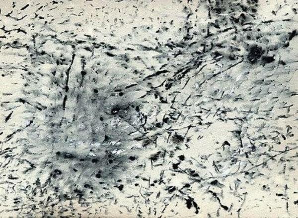 Необычный художник (11 фото)
