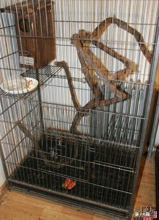 Необычное домашнее животное (6 фото)
