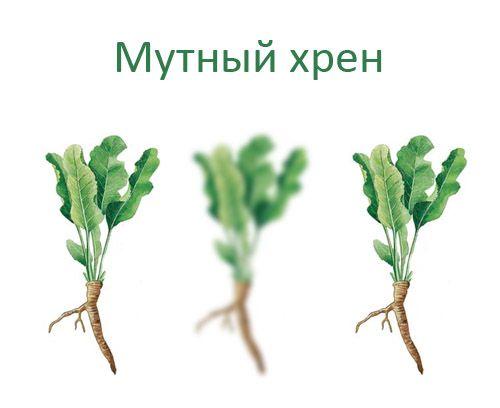 http://trinixy.ru/pics4/20090707/podborka_637_49.jpg