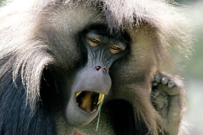 Зевающие животные (23 фото)