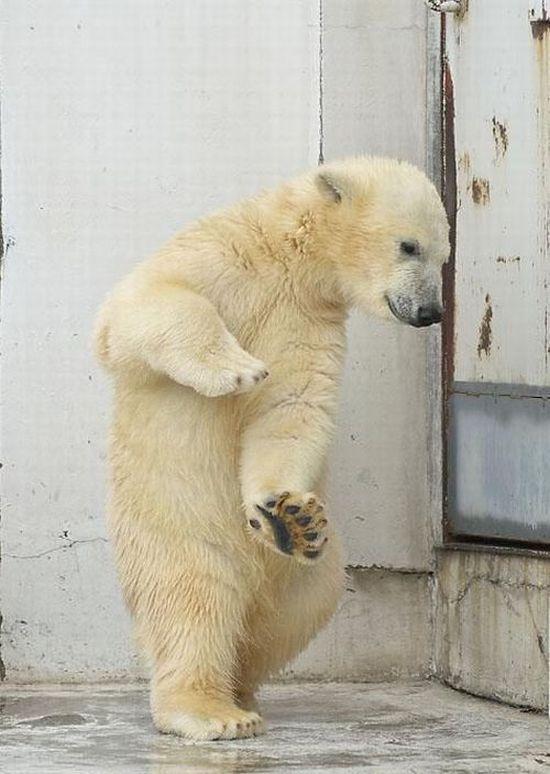 Танцующий медвежонок (4 фото)