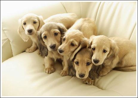 Классные щенки (17 фото)