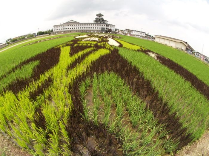 Рисунки на рисовых полях (13 фото)