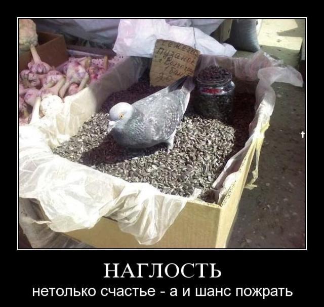 Подборка демотиваторов (91 фото)