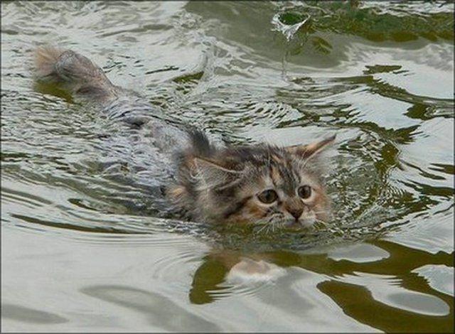 Плавающие коты (14 фото)