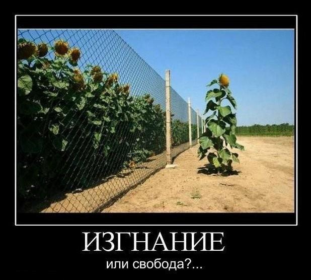 Прикольные картинки (97 фото)