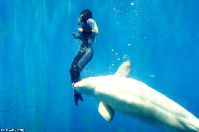 Дельфин-белуха спас жизнь дайверше (3 фото)