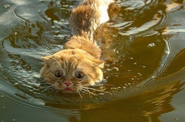 Испуганный кот (4 фото)