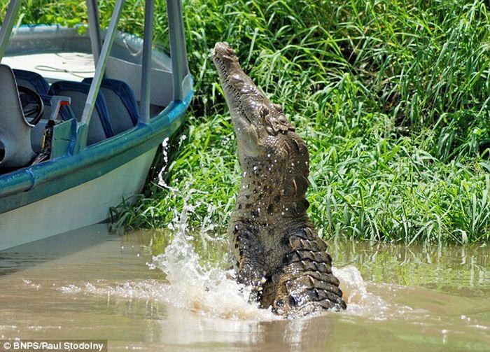 Крокодил решил помочь сделать хороший кадр (3 фото)