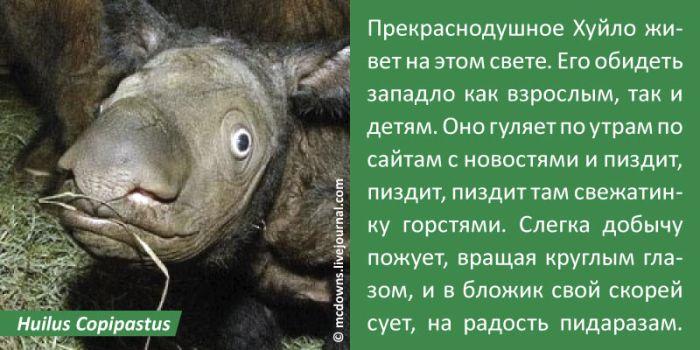 Сетятам о зверятах. Найди себя (11 картинок)