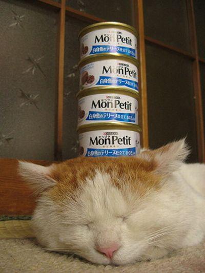 Сонный кот и консервы (4 фото)