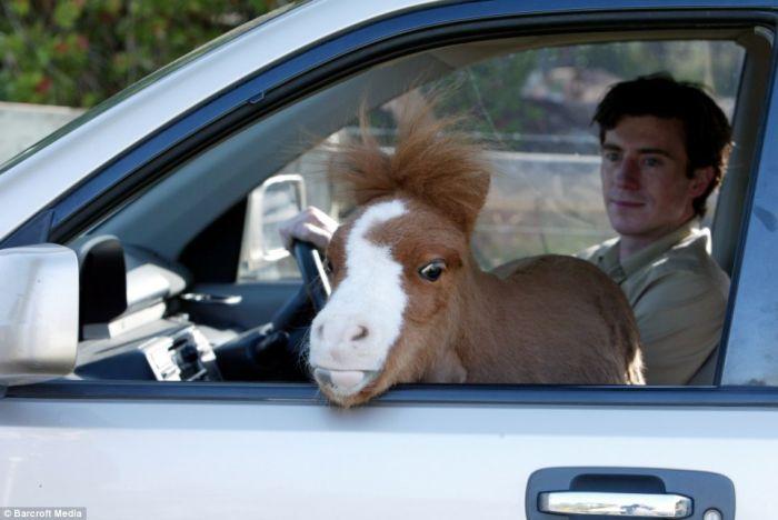 Миниатюрная лошадка-карлик (4 фото)
