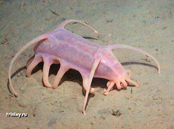 Морская свинья - очень уродливая штука (8 фото)