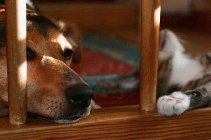 Как кошка с собакой (55 фото)