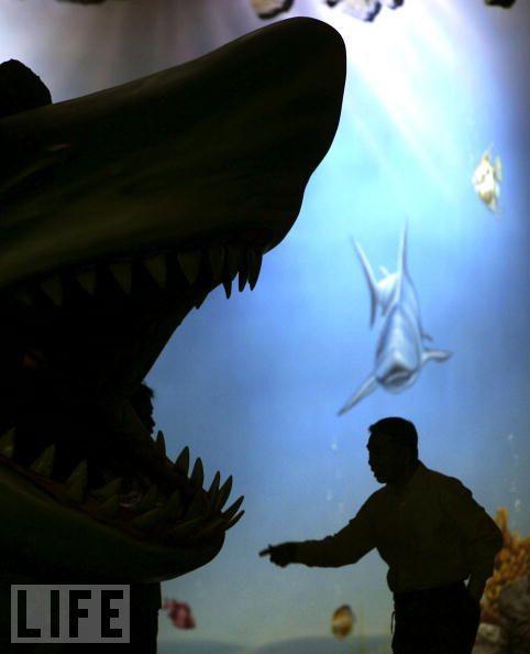 Пасть акулы (25 фото)