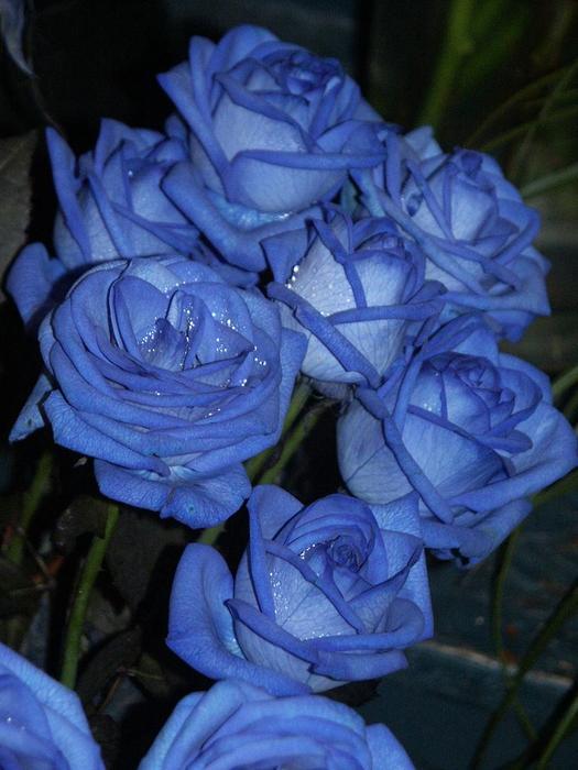 япония фильмы бдсм жестокие дом голубой розы