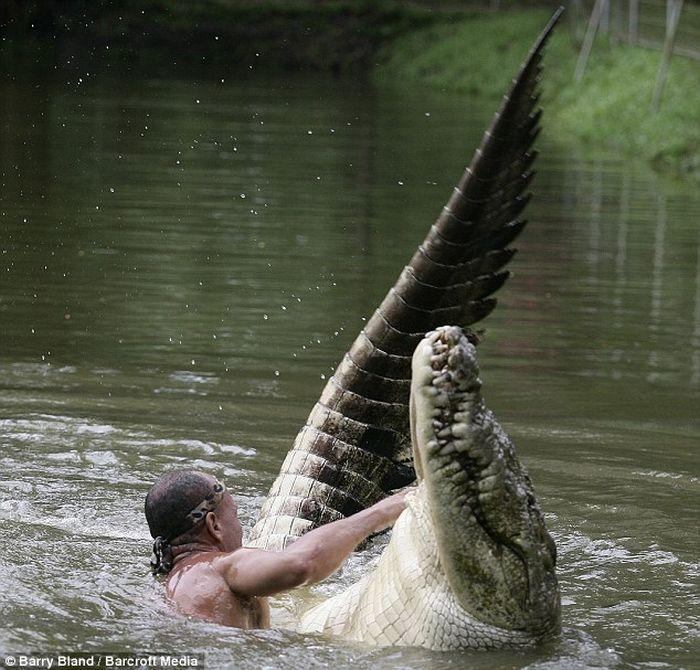 Дрессировщик крокодилов из Коста-Рики (4 фото)