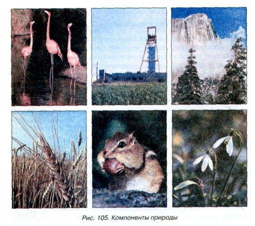 Прикольные картинки (181 фото)