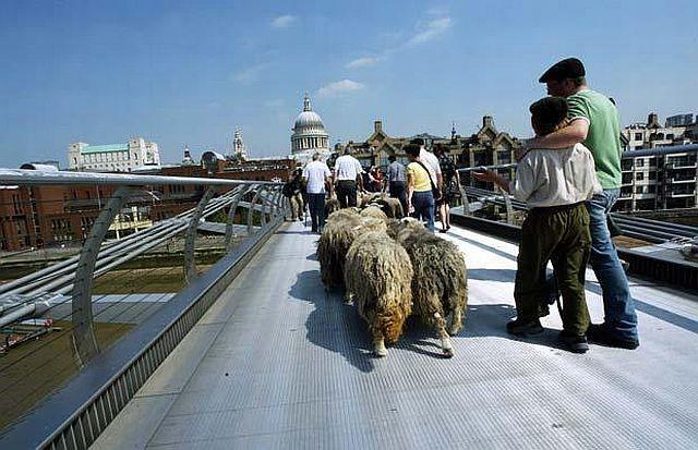 Животные в большом городе (28 фото)