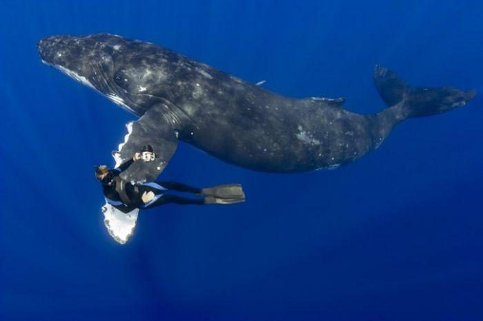 Танец с китом (4 фото)