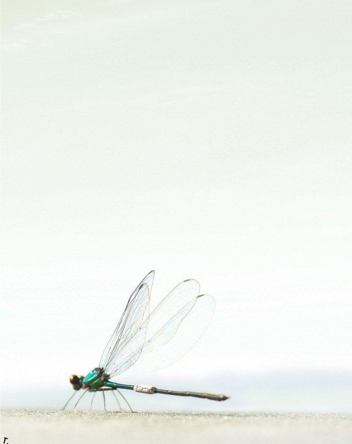 Работы Кристофера Гилберта (130 фото)