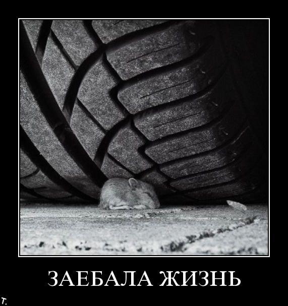 Подборка демотиваторов (84 фото)