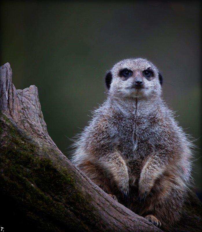 Свежие фотографии животных (20 фото)