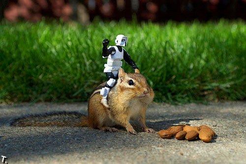Лучшие фотографии игрушек (35 фото)