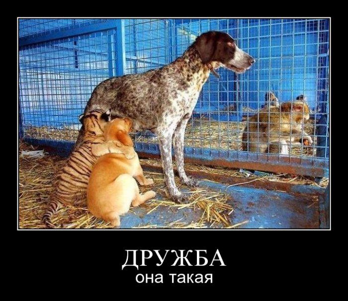 http://trinixy.ru/pics4/20090904/demotivators_39.jpg