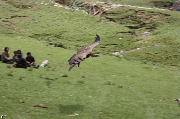 Небесные похороны на Тибете (52 фото) НЕ ДЛЯ СЛАБОНЕРВНЫХ!