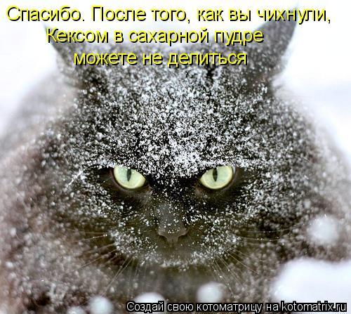 Лучшие котоматрицы августа (100 фото)
