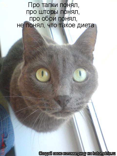 Смешные картинки про кошек и подписи, клипарт медалей