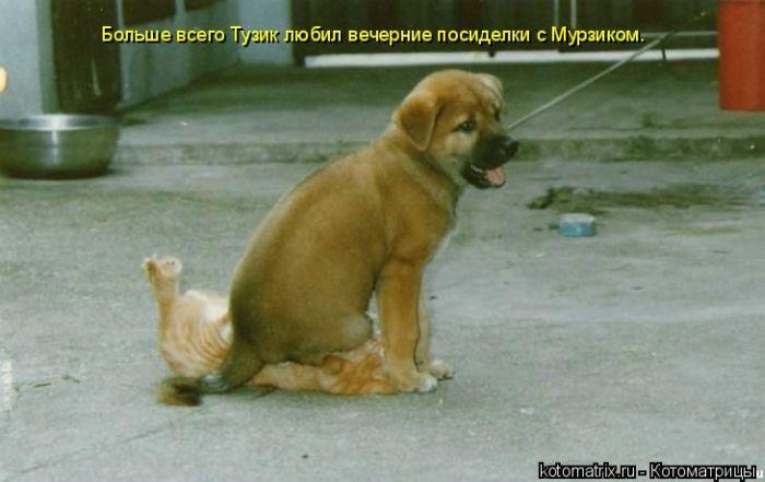 http://de.trinixy.ru/pics4/20090904/kotomatrix_61.jpg