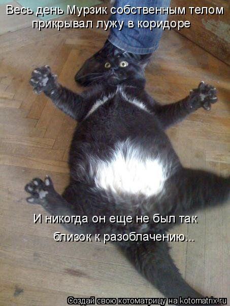 Великолепные фото котов и кошек.