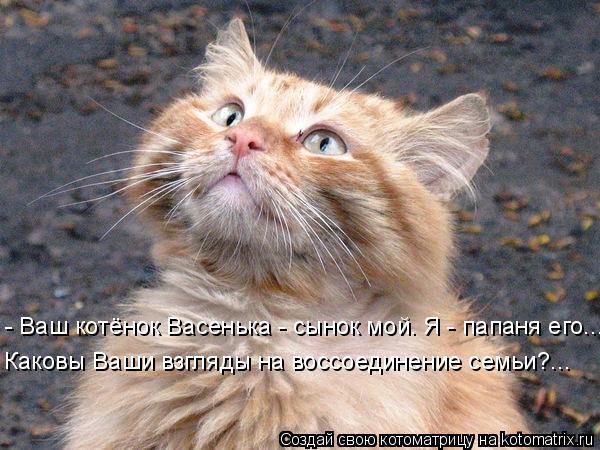 Лучшие <br /> котоматрицы августа (100 фото)