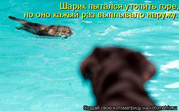 http://de.trinixy.ru/pics4/20090904/kotomatrix_94.jpg