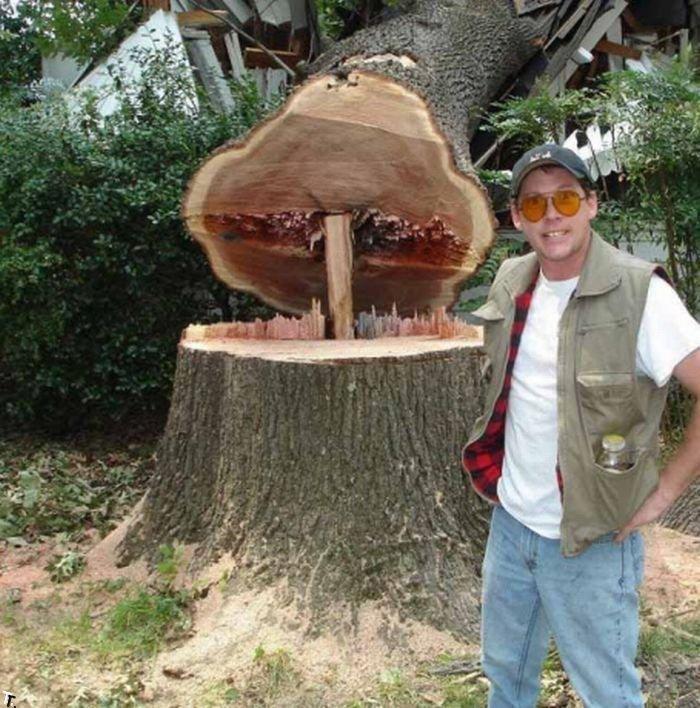 Как не стоит пилить деревья (5 фото)